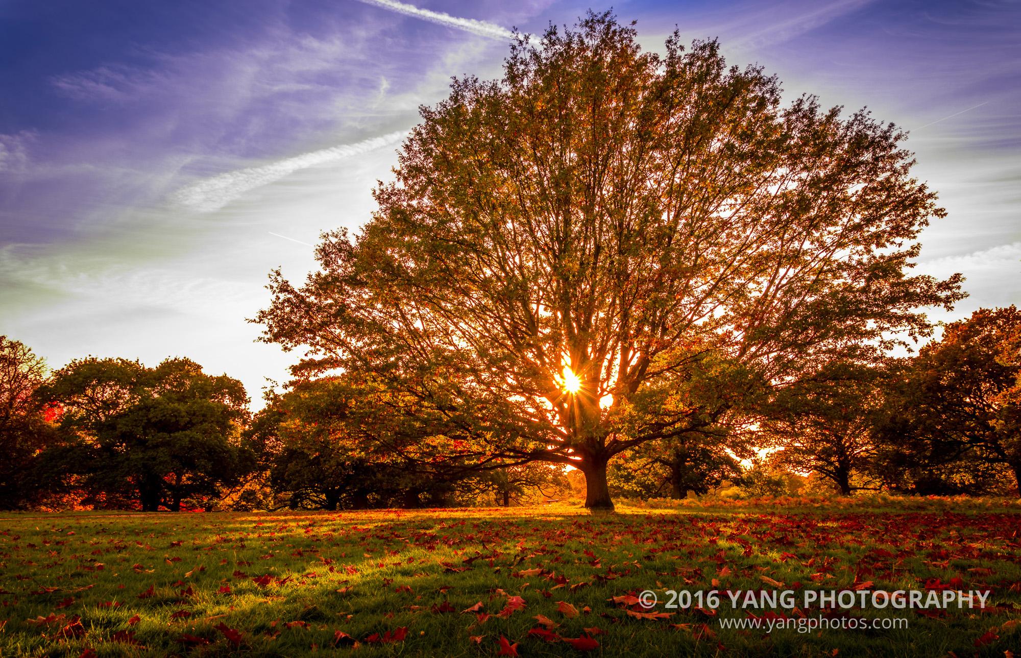 Richmond-Park-tree