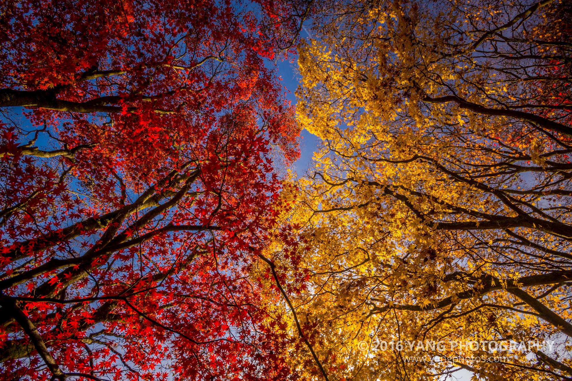 Surrey-Autumn