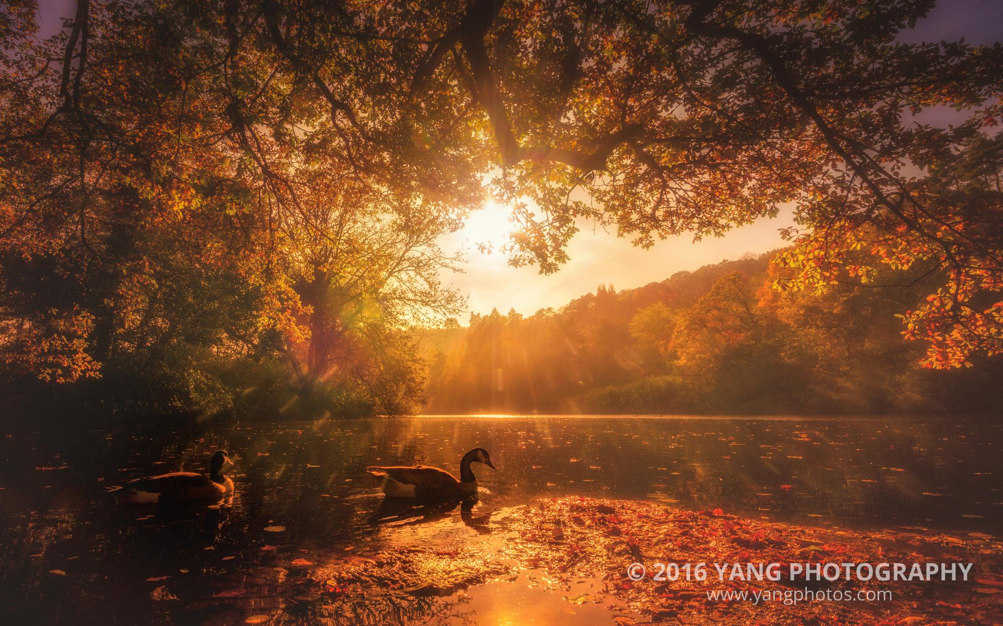 Surrey-Lake