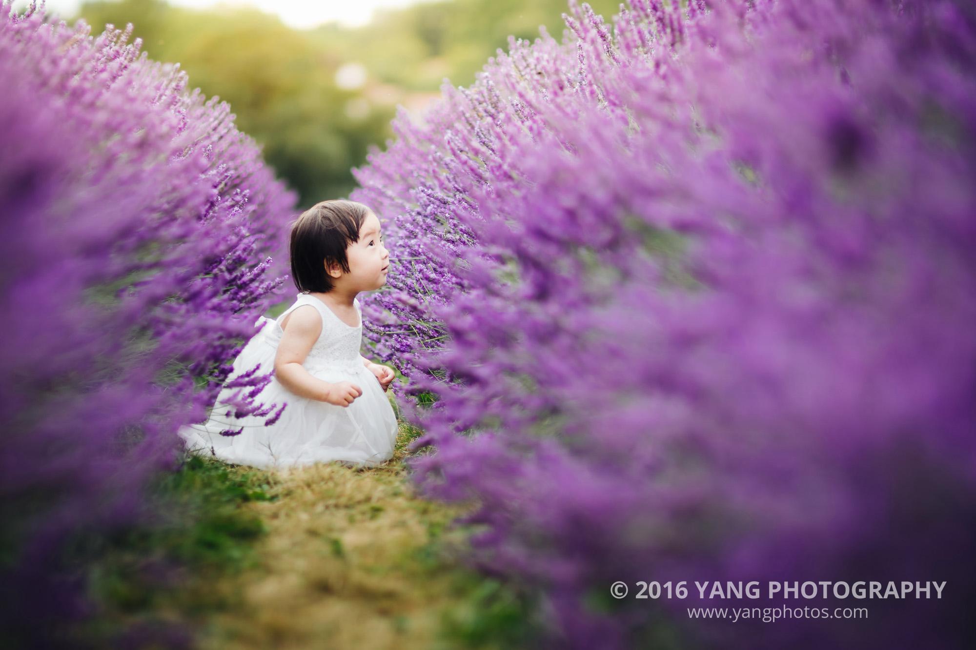 Lavender-Dodo