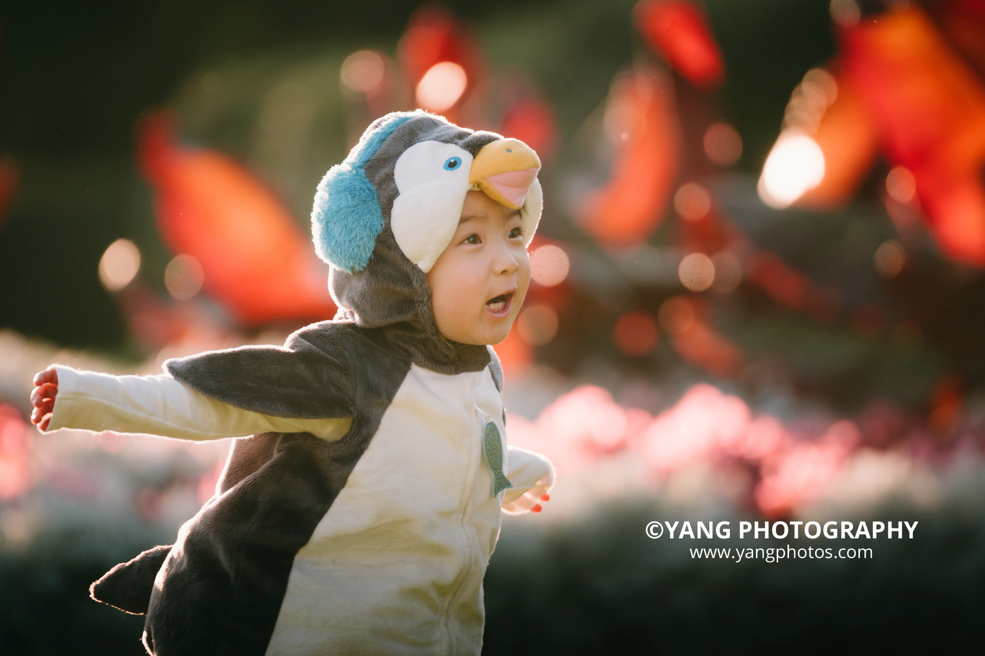 penguin-in-the-garden-Dodo-yangphotos