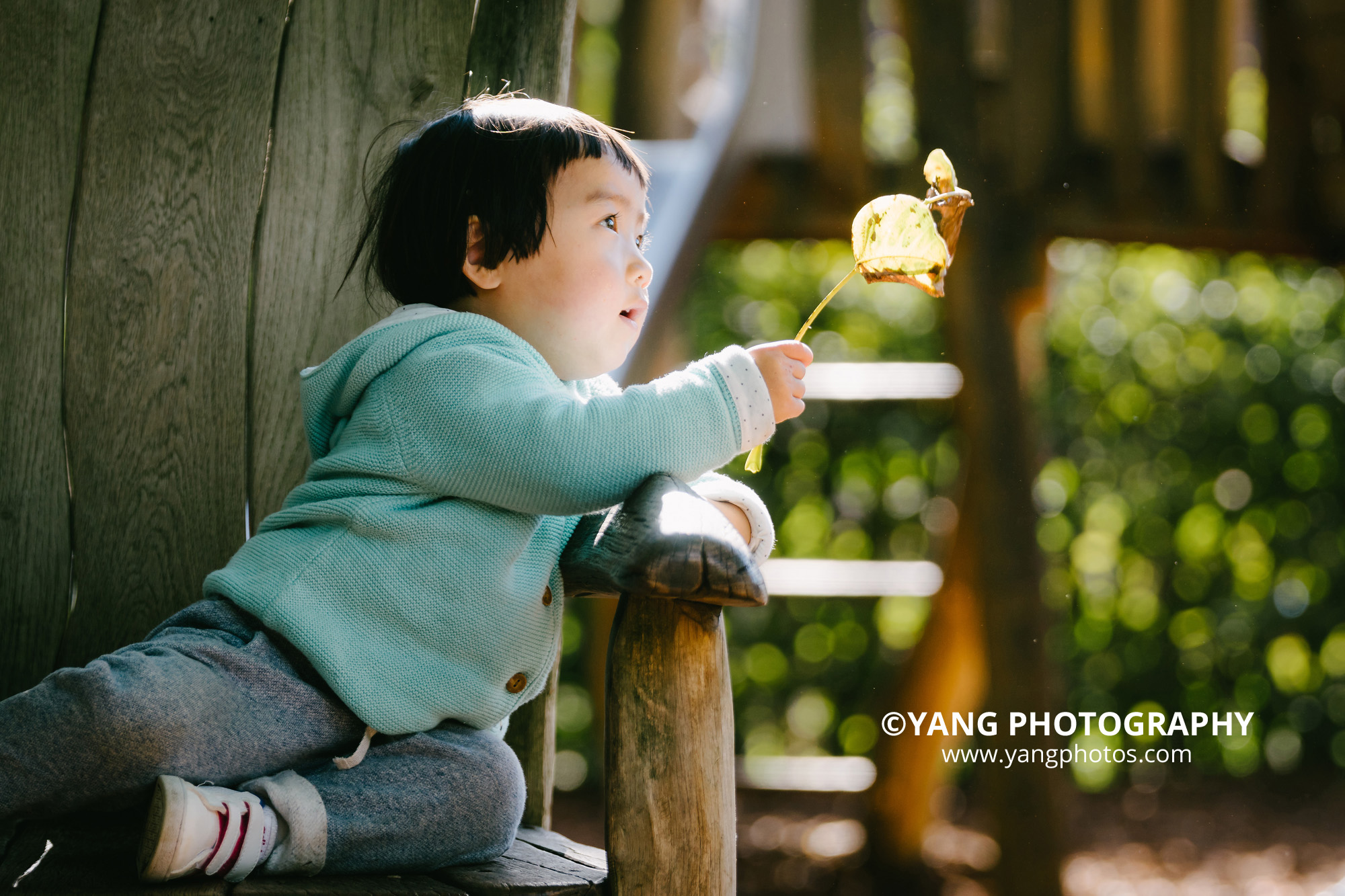 autumn-is-here-dodo-yangphotos